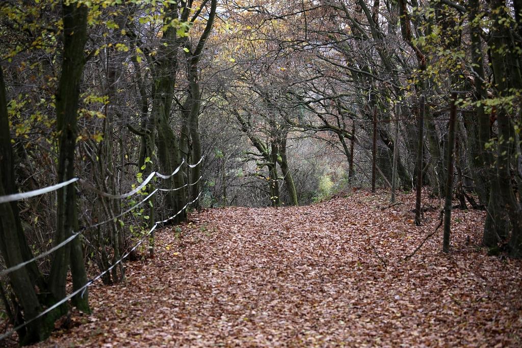 lahnwanderweg_trail8_61