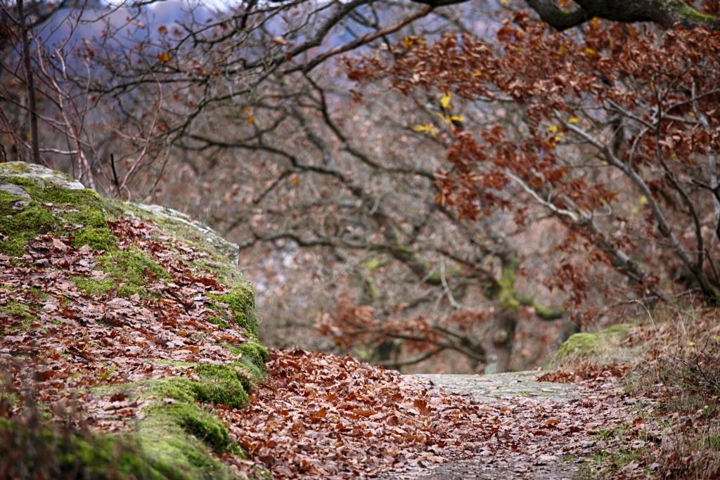 lahnwanderweg_trail8_62